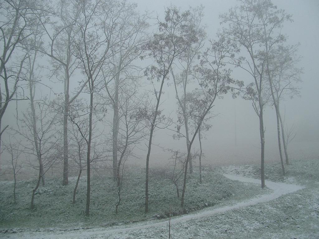 un inverno nevoso e grigio