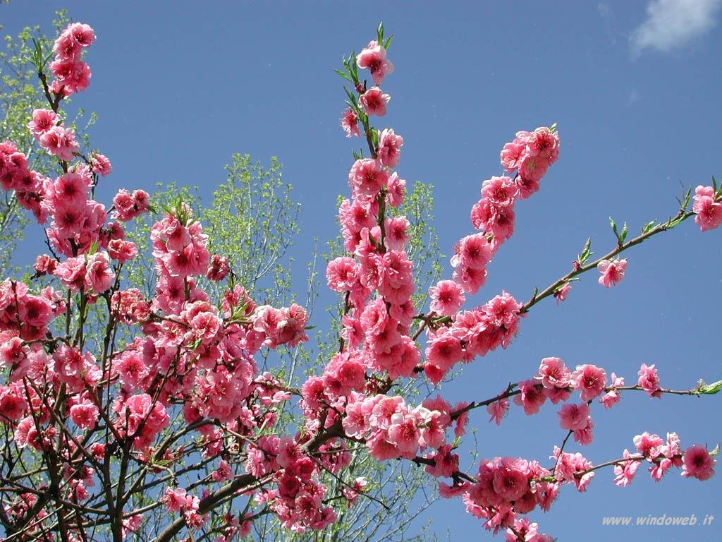 Febbraio 2007 oltre il cancello for Immagini primavera desktop