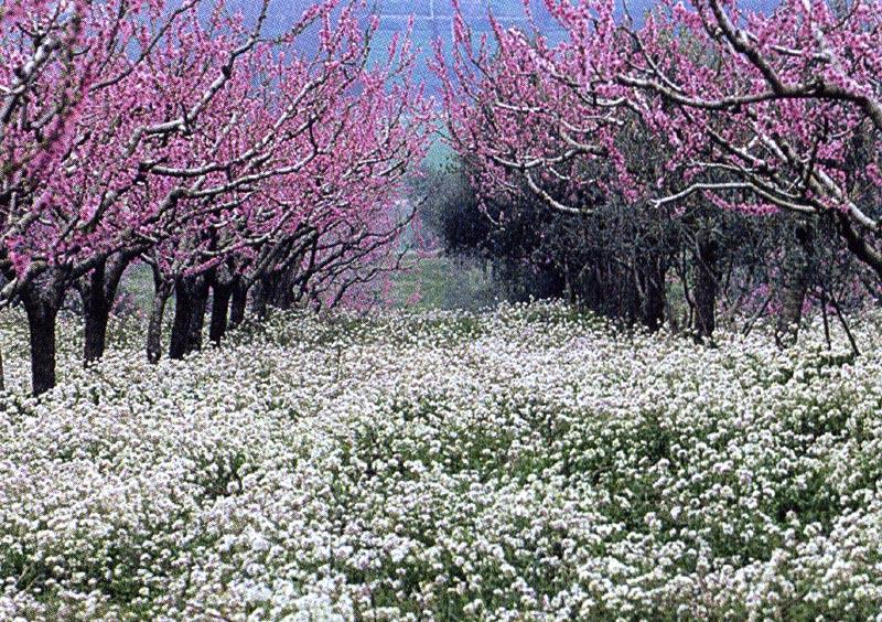Un Paesaggio Di Primavera Oltre Il Cancello