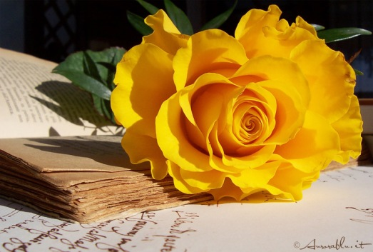 20060205190701_ancient_rose.jpg