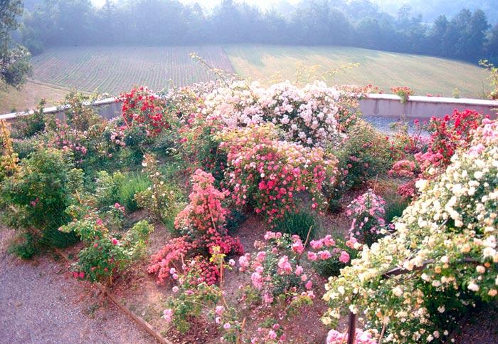 Cucciolo - Foto di giardini fioriti ...