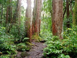 sentiero_foresta.jpg