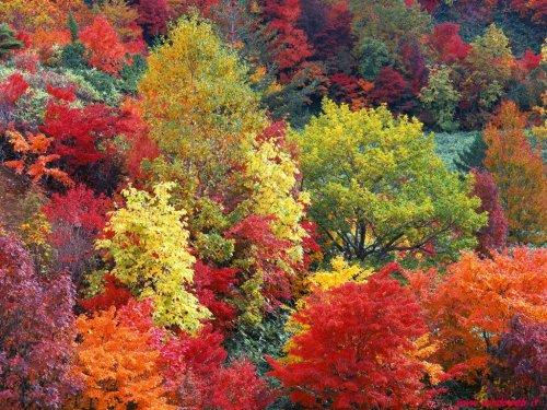 foto_autunno_7036.jpg