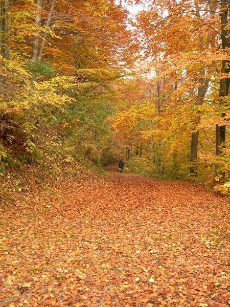 450px-autunno.JPG