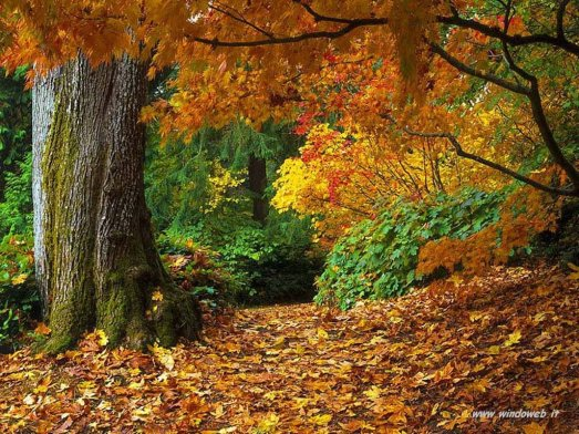 foto_autunno_320.jpg