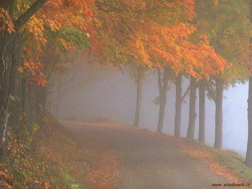 foto_autunno_362.jpg