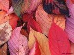 foto_autunno_354x.jpg