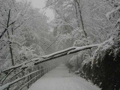 normal_6_-_alberi_abbattuti_dall_eccessivo_peso_della_neve_di_inizio_dicembre.jpg