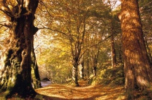 autunno-0.jpg
