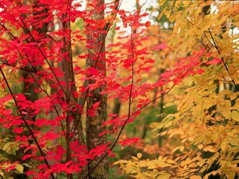 autunno-11.jpg