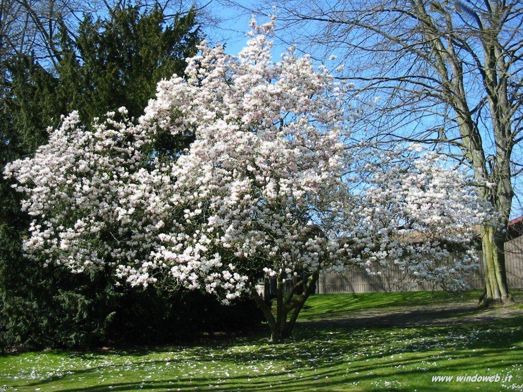Marzo 2008 oltre il cancello for Immagini desktop primavera