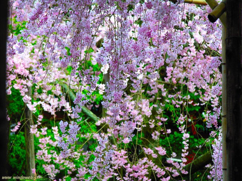 Aprile 2008 oltre il cancello pagina 2 for Immagini primavera desktop