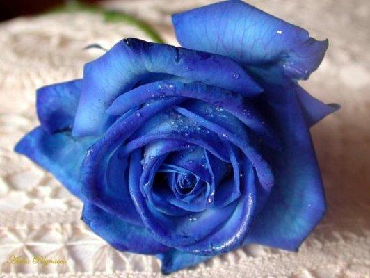 LE MIE DONNE  Rosa-blu