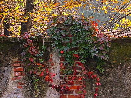 autunno19oct