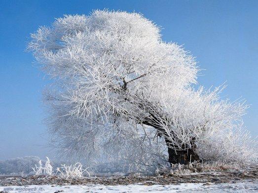 foto_inverno_7007