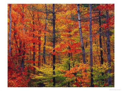 641033colori-d-autunno-new-hampshire-posters