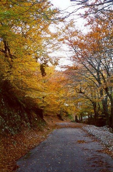 autunno11