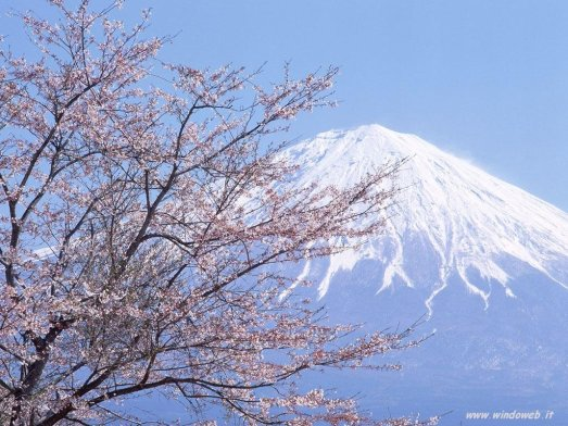 foto_primavera_310