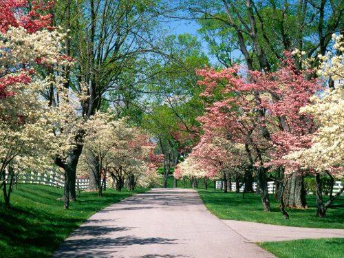 strada-in-primavera