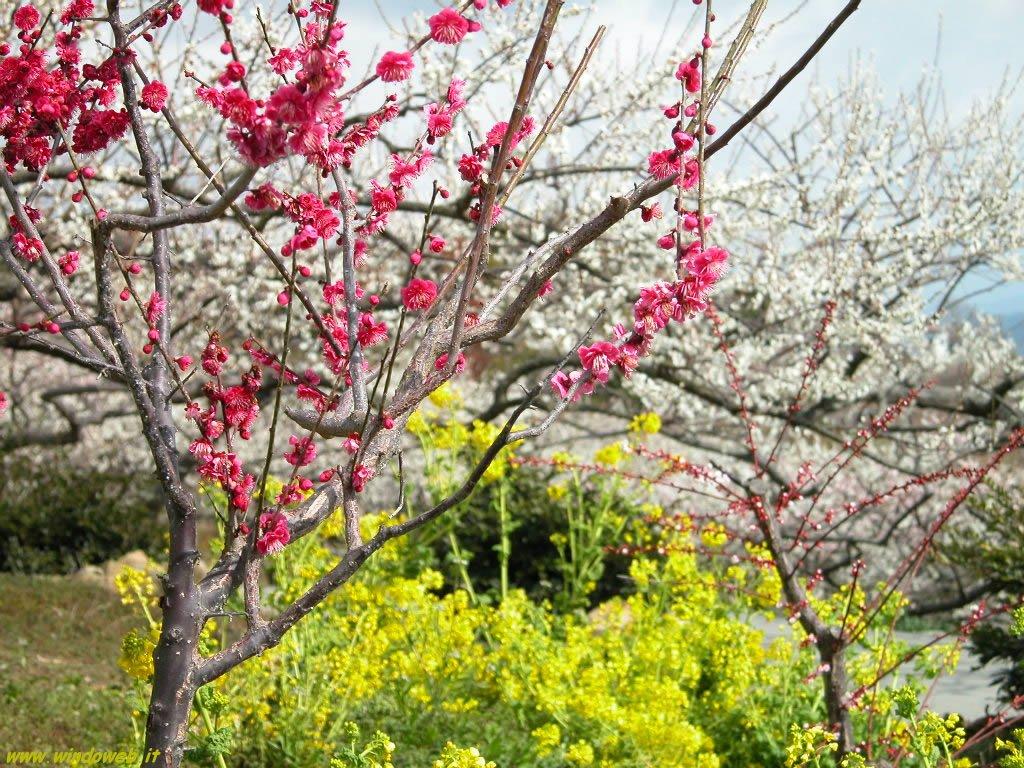 Seduzione di primavera oltre il cancello for Immagini desktop primavera