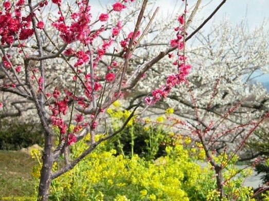 foto_primavera_7008