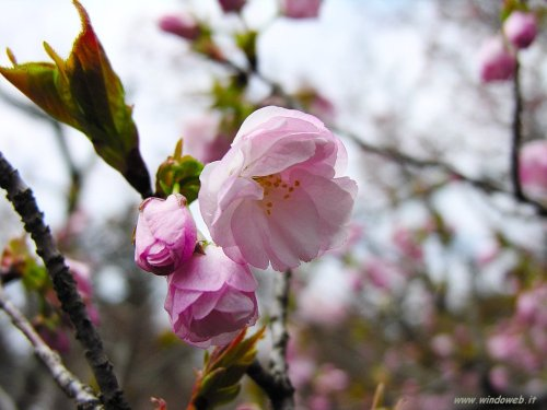 foto_primavera_7038