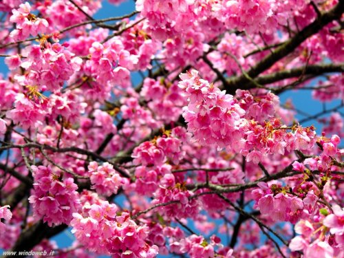 foto_primavera_7011