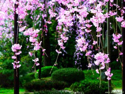 foto_primavera_7031