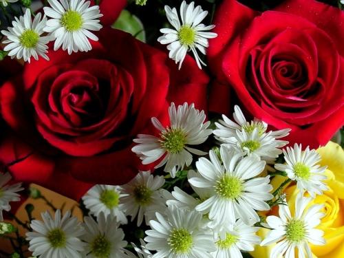 fiori_4