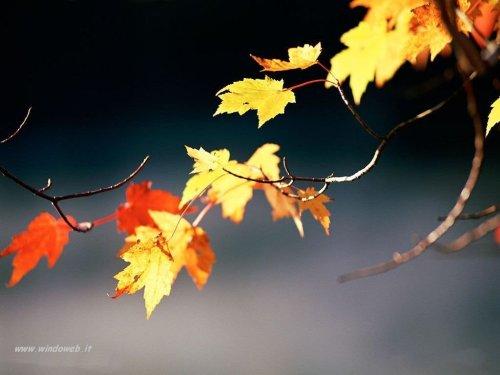 foto_autunno_333