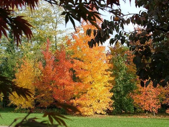 Il sole d autunno oltre il cancello - Alberi da piantare in giardino ...
