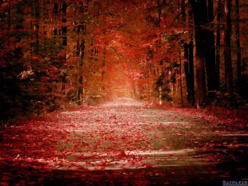 autunno-rosso