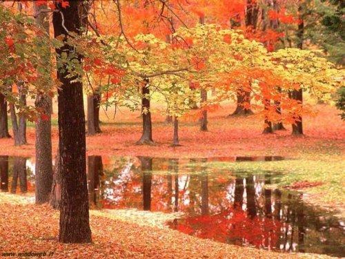foto_autunno_357