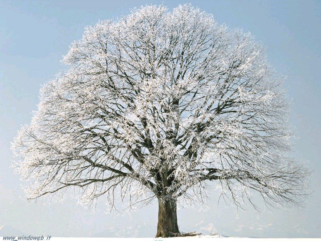 Gli alberi   Oltre il ...