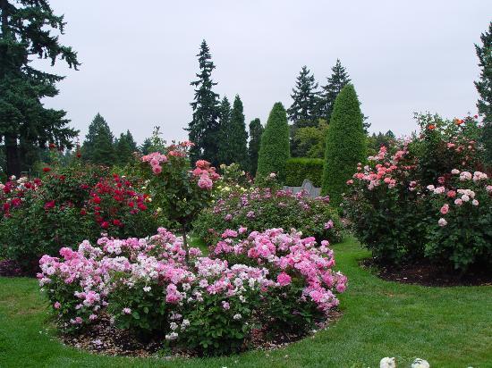 nel giardino incantato oltre il cancello