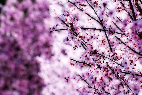 D infinito e di primavera oltre il cancello for Immagini gratis per desktop primavera