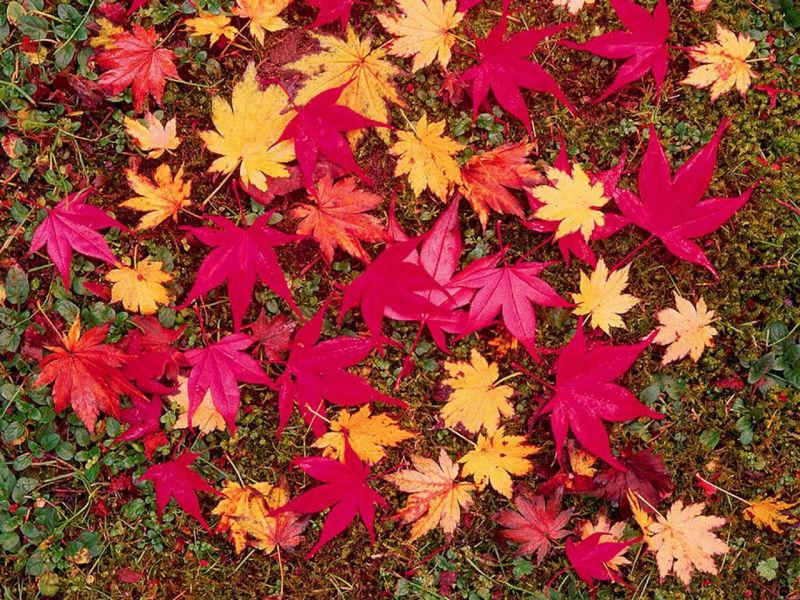 Attesa d autunno oltre il cancello for Autunno sfondi desktop