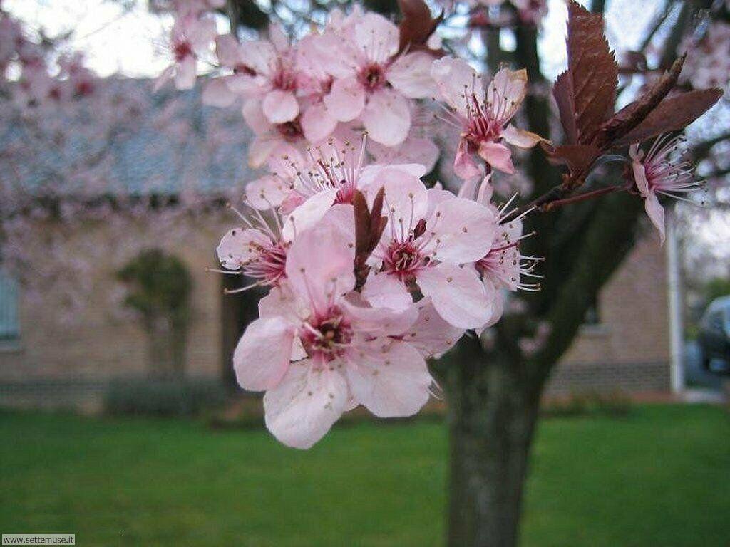 Marzo 2012 oltre il cancello for Immagini primavera desktop