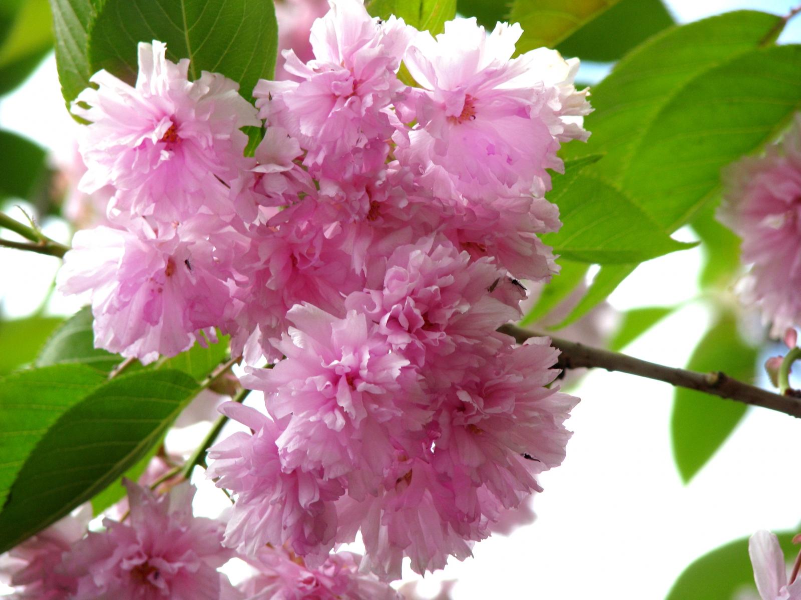 ... ricordi; nei prati, il profumo dei fiori – e pietà per chi resta