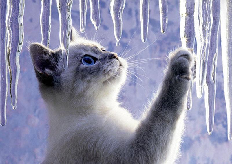 Gatti al freddo in inverno come curarli oltre il cancello for Immagini desktop inverno