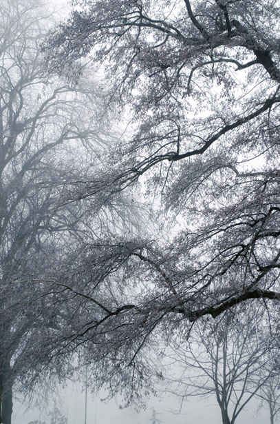 winter-fog-1355431023Pvj