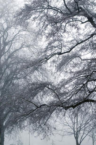 winter-fog-1355431023Pvj