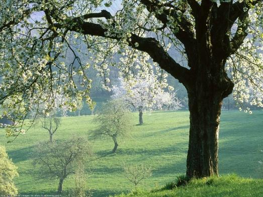 primavera12