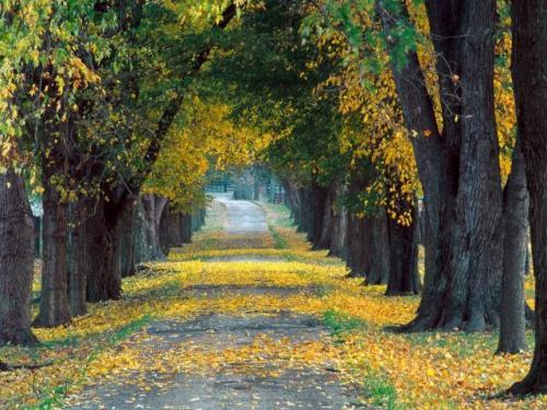 autunno 4