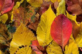 foglie2