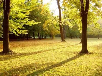 sfondo-parco-in-autunno-400x300