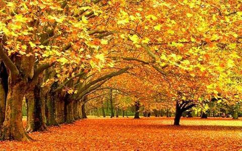 Di foglie dorate oltre il cancello for Sfondi autunno hd