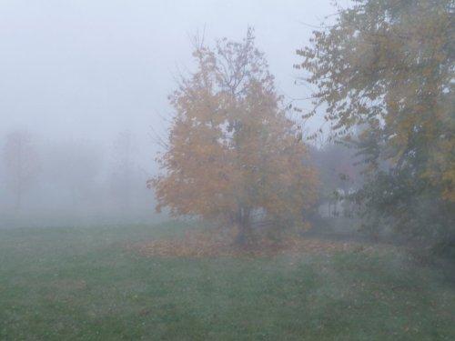 autunno-nebbia