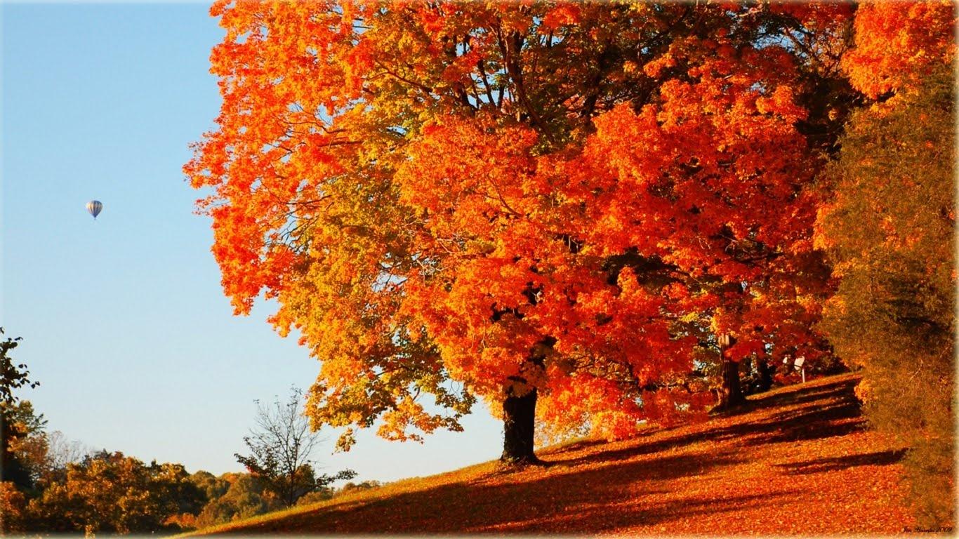 Primavera d autunno oltre il cancello for Autunno sfondi desktop