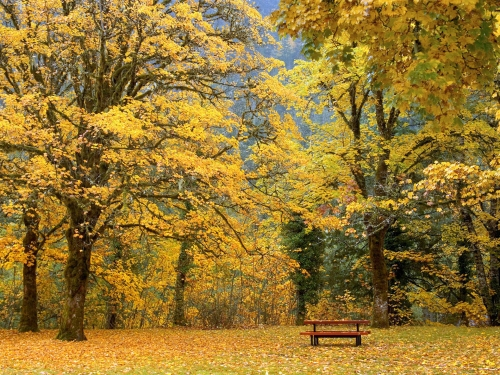 Picnic under the Maples